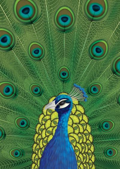 Link toCreate a peacock illustration in illustrator cs5 - tuts+ premium tutorial