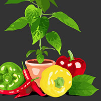 Create a Graphic Still Life with Image Trace and the Blob Brush Tool – Tuts+ Premium Tutorial
